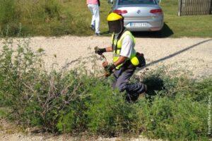 Gradska uprava uspešno je sprovela javnu nabavku za sistematsko uklanjanje ambrozije na teritoriji Požarevca. Ugovor je dodeljen preduzeću Eko-San Plus.