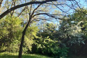 drveće šuma